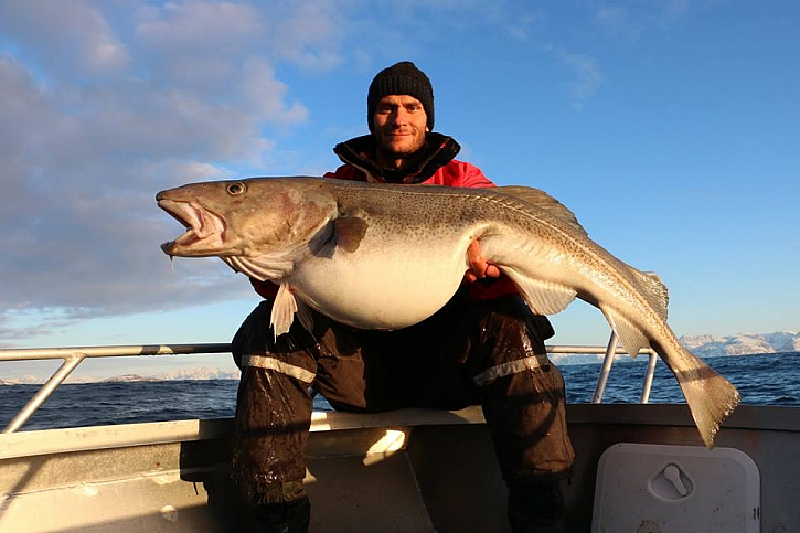 Trofejní tresky z Norska