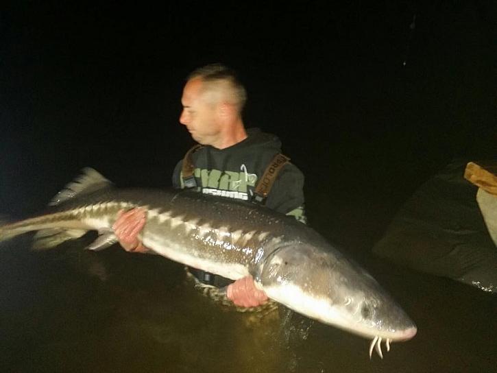 Jeseter 187 cm, 42 kg. Přišel v noci, obrovská ryba, přál bych každému rybářovi ten souboj :)