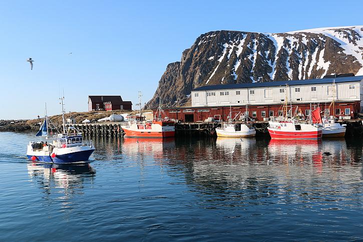 Sníh na severu Norska ještě je. Pomalu končí období trofejních tresek .