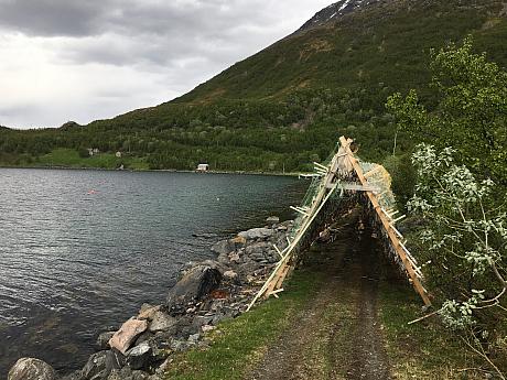Sušárny ryb v Norsku, Bergsfjord. Loppa.