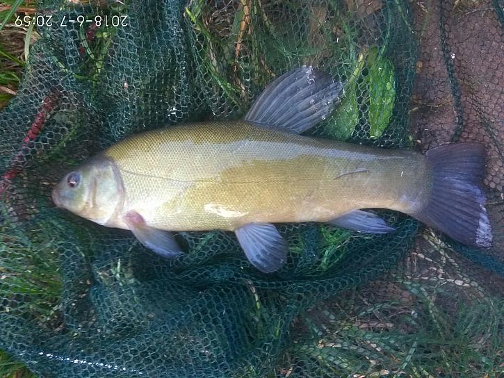 Ono vlastně je vždy krásně v přírodě, dneska pár ryb, které jsem samozřejmě jako všechny vrátil vodě.