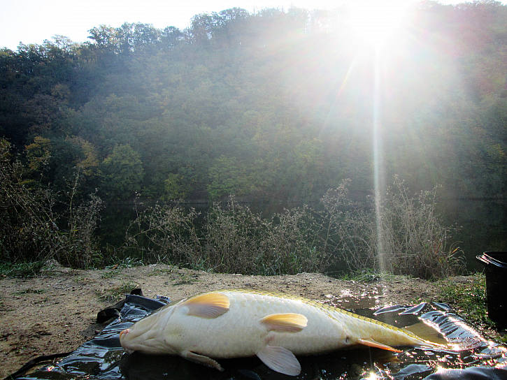 Zasílám fotky těch nejhezčích ryb - foceno na samospoušť.